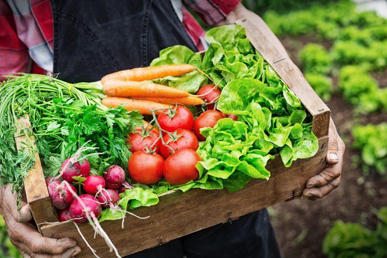 Hands holding a grate full of fresh vegetables